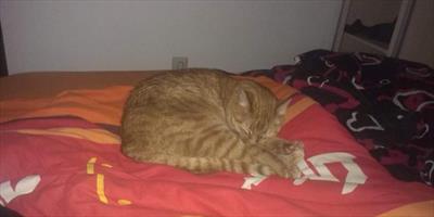 Garfield, mein tierischer Held | story.one