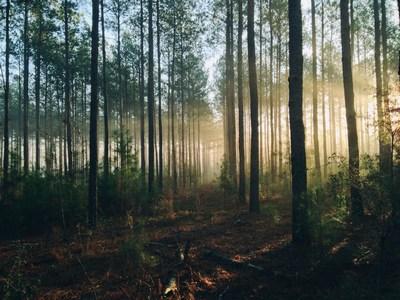 Das Osterwunder im Wald | story.one