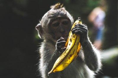 Von Bananen, Affen und Prozentsätzen | story.one
