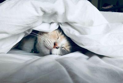 Katze namens Katze | story.one