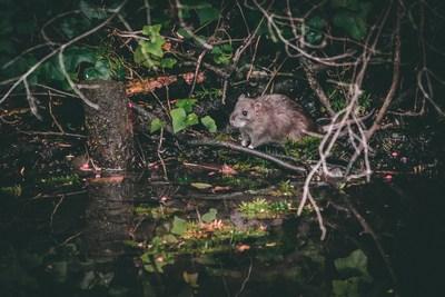 Unsere Öko-Ratten   story.one