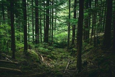 Wald.Regen.Leben   story.one