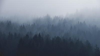 Vom Nebel und anderen Suppen | story.one