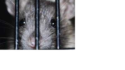 Freund Ratti | story.one