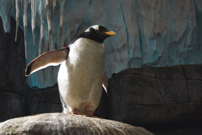 R.I.P. Pinguin | story.one