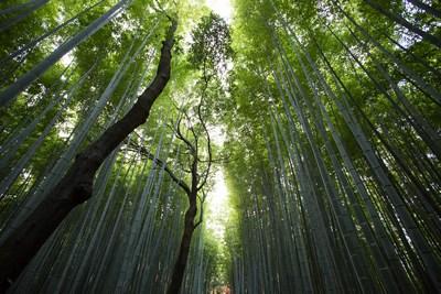 Überlebenskampf unter schattigen Bäumen | story.one