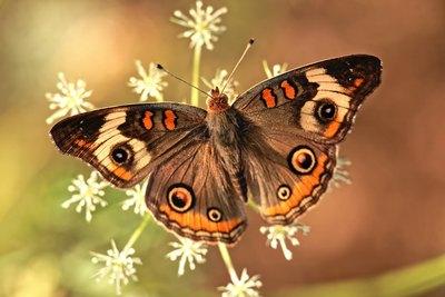 Ohne Wandel gäbe es keine Schmetterlinge | story.one