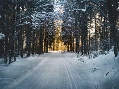 """Wohnt das Christkind im Wald?"" | story.one"
